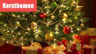 Kerstboom kopen? - Van grote tot kleine kerstboompjes