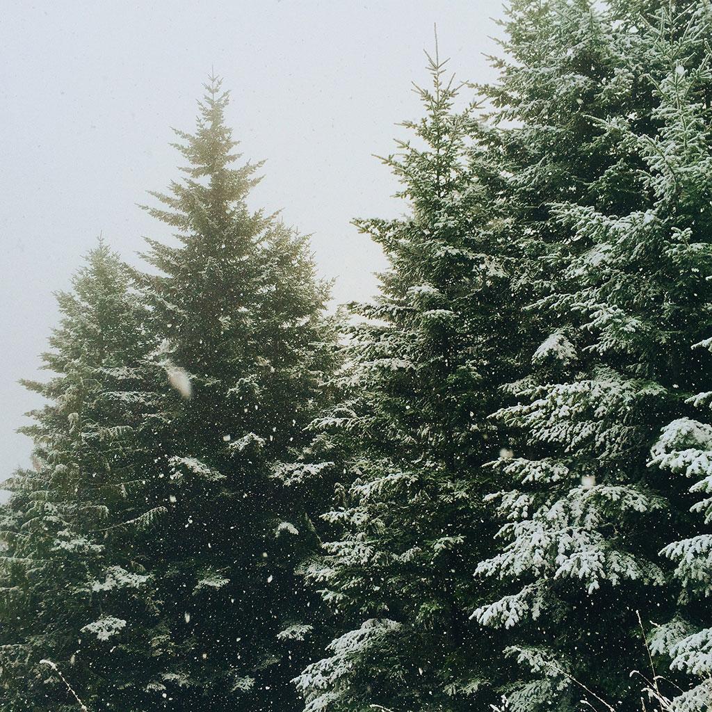 Ik verlang naar de winter